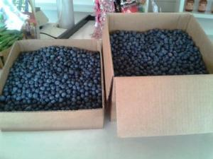 10lb and 20lb boxes of blueberries
